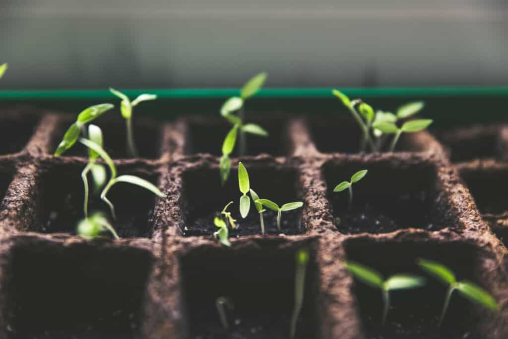 potted plants growing nurturing for lead management article